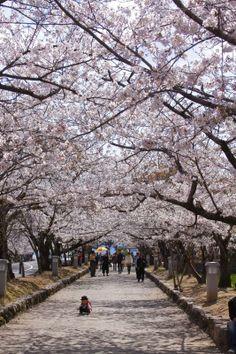 Omura Park Omura City & Isahaya City Flowers