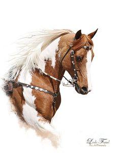 Gorgeous Paint horse painting, Linda Finstad