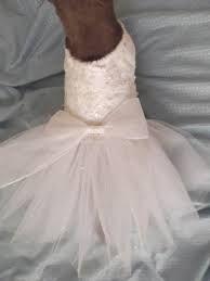 dog whit wedding dress - Google Search
