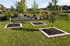 Garden box idea -Sierra Grey Quarry Stone Tree Boxes
