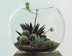 Glass Terrarium - Hermetica London