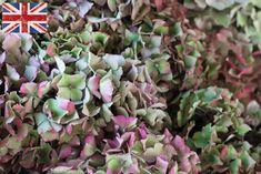 British Hydrangea, Autumn Foliage at New Covent Garden Flower Market - October 2015 New Covent Garden Market, Flower Market, Marketing, Flowers, Plants, British, Hydrangeas, Autumnal, Collaboration