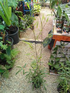 Plants, Deco, Plant, Planets