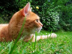 Reclaim your flowerbeds! Plants that deter cats. #animals #gardening