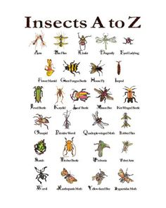lucy-autrey-autrey-wilson-insects-a-to-z.jpg (360×450)