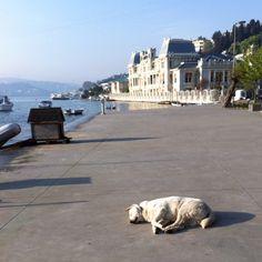 Morning nap in the sun, Bebek/Istanbul