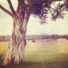 iPhonograhy by Christy Hydeck : Buy this Limited Edition Instagram print on Hashpix.com #tree
