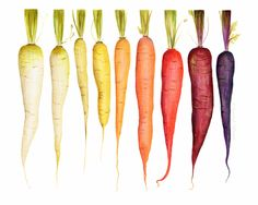 Rainbow carrots, 2014 | by Kendyll Hillegas