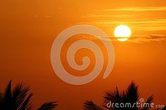 Sunrise over Palm trees