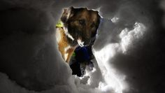 Fra NRK Dogs, Animals, Animales, Animaux, Pet Dogs, Doggies, Animal, Animais