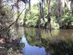 hiking along the Little Manatee River in Florida Hiking In Florida, Manatee, Forests, Woods, Camping, River, Fitness, Photography, Outdoor