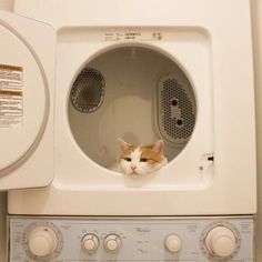 """I hate to be a wet blanket (no pun intended) on all the """"cute"""" pix of kitties in. - I love cats :-) - Kitty kit I Love Cats, Cute Cats, Funny Cats, Pretty Cats, Beautiful Cats, Cat Aesthetic, Beige Aesthetic, Crazy Cat Lady, Crazy Cats"""