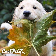 So delicious... | Baya lezzetli... #dog #doglover #pet #petlover #coolpets #CoolPetZ