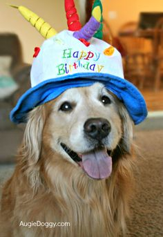 My birthday is June I accept all gifts and accolades ; Funny Happy Birthday Wishes, Happy Birthday Images, Animal Birthday, Dog Birthday, Dogs Golden Retriever, Golden Retrievers, Dog Dna, Dog Nose, Kids Birthday Party Invitations