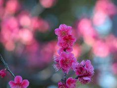 Colores de primavera by T. Bokeh Photography, Beauty Photography, Wildlife Photography, Out Of Focus, Image, Spring Colors, Nature Photography