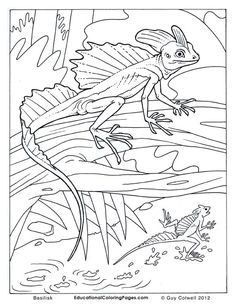anaconda coloring page Coloring Pages Snake23 Reptile