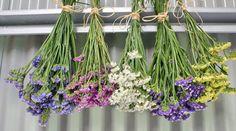 Wenn man Blumen richtig trocknet, halten sie für die Ewigkeit. Wir zeigen mehrere Möglichkeiten, wie man Rosen und weitere Blumen richtig trocknet.