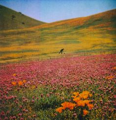 What I wouldn't give to there right this moment. California Poppy, Summer Solstice, Carpe Diem, Shadow Box, Fields, Poppies, The Good Place, In This Moment, Mountains