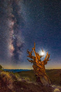 https://flic.kr/p/AdXVXH | The Ancient Bristlecone Pinetree's Milky Way and Moon | © Jerry T Patterson - All Rights Reserved Worldwide In Perpetuity - No Unauthorized Use. Absolutely no permission is granted in any form, fashion or way, digital or otherwise, to use my Flickr images on blogs, personal or professional websites or any other media form without my direct written permission. ▀▀▀▀▀▀▀▀▀▀▀▀▀▀▀▀▀▀▀▀▀▀▀▀▀▀▀▀▀▀▀▀▀▀▀▀▀▀▀▀▀ Equipment: Canon 5D Mark III, Canon 16-35mm f2.8L II USM lens…
