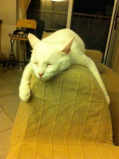 Gioca così tanto, che crolla dove capita ❤️ Cats, Animals, Gatos, Animales, Animaux, Animal, Cat, Animais, Kitty