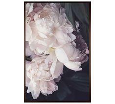 "Petals Framed Print by Cindy Taylor, 28 x 42"", Wood Gallery Frame, Espresso, Mat"