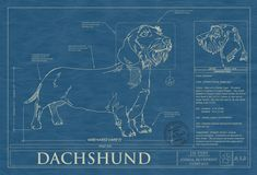 Blueprint of a Wire Haired Dachshund