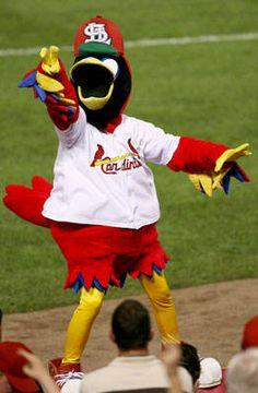 170 Fredbird ideas | cardinals, stl cardinals, cardinals baseball