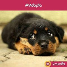 Dales cariño y amor, estos peludos sabrán agradecértelo. #Dogs#Perro#Puppies#Perritos#Peludos#Instapet#Instadog#DogLover#Love#Amor#Care#Cuidados#Kmimos#Love#Amor#Care#Cuidados#Amigos#Friends#México#Mx