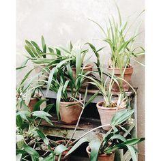 Por 1.000 plantas más