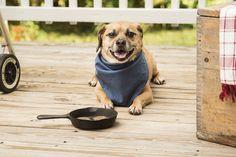 © Alice G Patterson Photography | lifestyle dog portraits, Syracuse dog photographer
