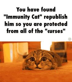 I didn't need to be told immunity cat will protect me to make me post it. I would repost of how cute he or she is😃 Cute Cats, Funny Cats, Funny Animals, Cute Animals, Funny Quotes, Funny Memes, Hilarious, Immunity Cat, Chain Messages