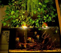 I don't know half of you half as well as I should like, and I like less than half of you half as well as you deserve. Nature Aquarium, Home Aquarium, Planted Aquarium, Diy Aquarium Stand, Aquarium Design, Discus Tank, Indoor Pond, Biotope Aquarium, Tropical Fish Tanks