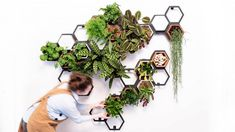 Horticus is showcasing its indoor living wall system as part of the Dezeen x Planted collaboration during this year's London Design Festival. Metal Trellis, Terracotta Plant Pots, Vertical Garden Wall, London Design Festival, Faux Plants, Little Plants, Plant Hanger, Garden Design, Dezeen