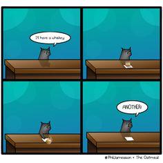When cats are sad.