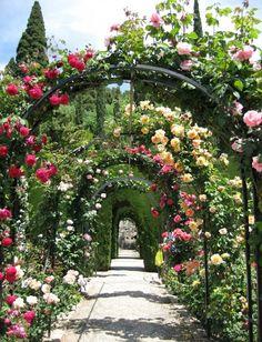 Gartenpfad mit mehreren Rosenbögen in verschiedenen Farben