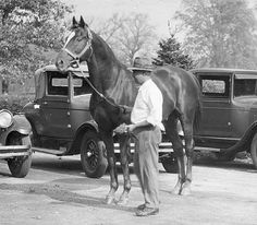 Three-time leading American sire Fair Play, sire of Man o' War, pictured shortly after he was auctioned off in 1924 after his owner August Belmont Jr's death. Aged 19 at the time, he fetched $ 100,000. Bought by Joseph E Widener and moved to Elmendorf Farm, where he died on December 17, 1929. He was buried under a half-size statue of himself on a part of Elmendorf which is now known as Normandy Farm. Man o'War's mother Mahubah was bought at the same sale and is buried beside Fair Play.