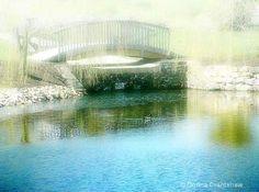 Bridge  and  pond