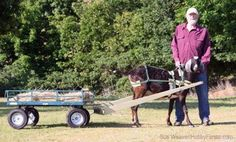 Maybe you'd like to teach your goat (or sheep or big, strong dog) to pull a wagon or sled. To do it, you'll need a harness, so I'm going to show you how to make one.: