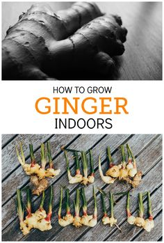 Ginger is the perfect herb to grow indoors. It's very low-maintenance, loves partial sunlight, and you can use parts of it at a time, leaving the rest in the soil to continue growing. Besides, it's delicious!