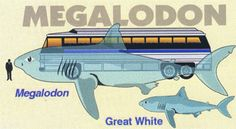Megalodon. It's bite is like a freight train full of butcher knives crashing into you!