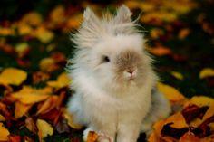 fuzzy baby bunny