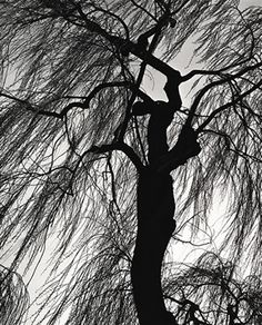 Brett Weston, Oregon