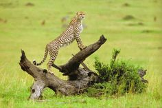 Images of the World - African National Parks.