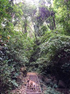 Finca El Pilar, a coffee farm & great hike outside of Antigua, Guatemala