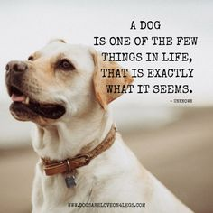 Dog Quote - A Dog Is One Of The Few Things In Life