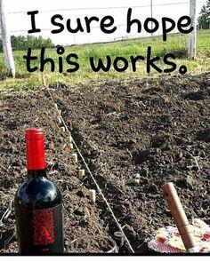 Weekend gardening project wine humor wineglasswriter meme is part of Wine jokes - Wine Jokes, Wine Meme, Wine Funnies, Funny Wine, Alcohol Humor, Funny Alcohol, Alcohol Quotes, Wine Signs, Coffee Wine
