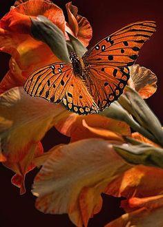 lovely4u2: livingpierside: fineartamerica.com ❤•.¸✿¸.•❤ Lovely❤•.¸✿¸.•❤