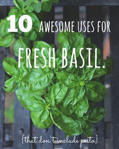10 Awesome Uses For Fresh Basil – Radiantly You Summer Recipes, New Recipes, Vegan Recipes, Cooking Recipes, Favorite Recipes, Fresh Basil, Fresh Herbs, Container Herb Garden, Herb Gardening