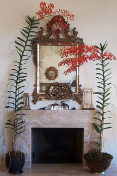 Ridiculous awesome indoor plant orchid flower stem flank aged mirror on mantelpiece