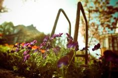 BOOST YOUR MOOD WITH GARDENING